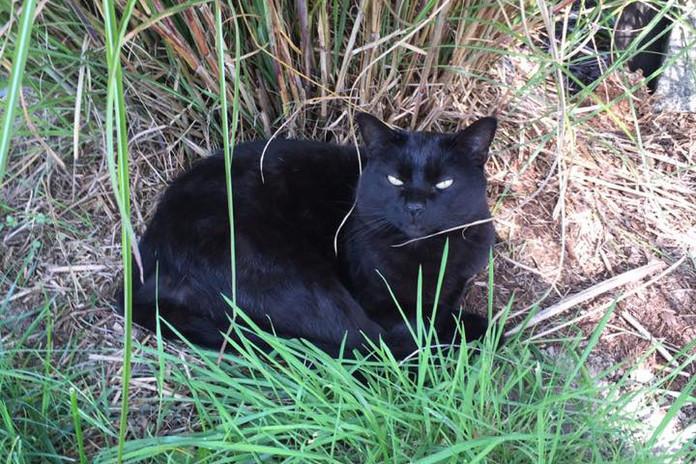 farm-cat.jpg