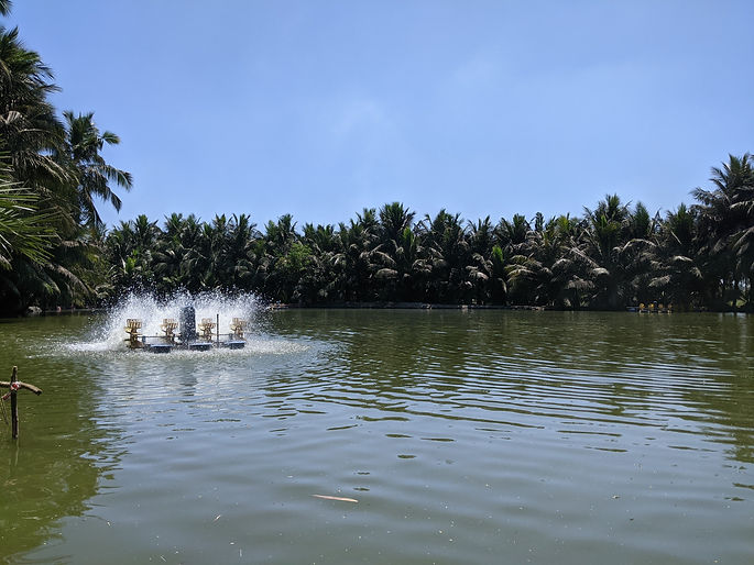 Andhra farm.jpg