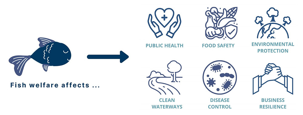 The multi-faceted benefits of incorporating animal welfare into aquaculture. For more information, see fwi.fish/why-the-welfare.