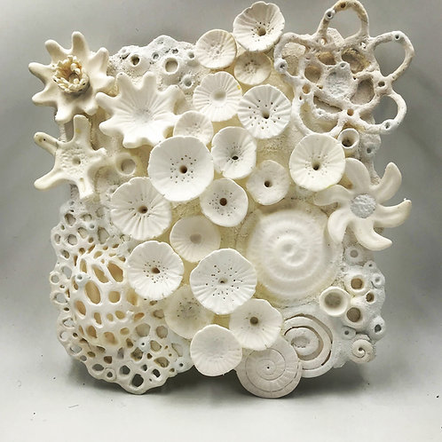 White Chocolate Reef