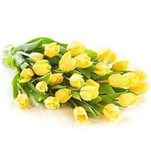 Bouquet of 20 Yellow Tulips