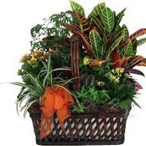 Mixed Tropical Planter