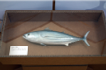 魚の展示.png
