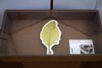 海藻の展示.png