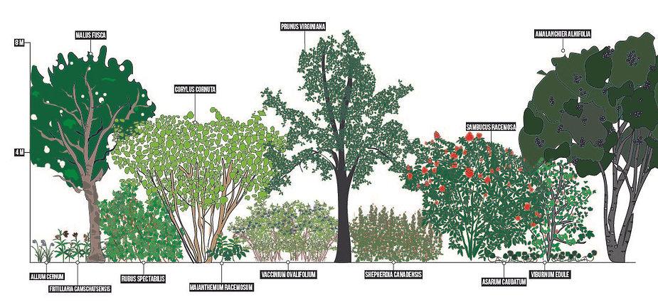 Forest Garden Line Up-01.jpg