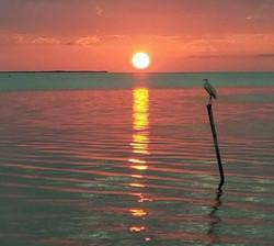 sunset caye caulker