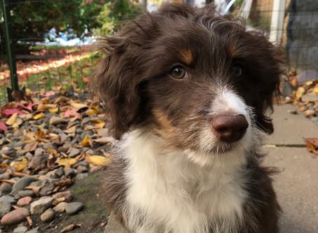 Puppy of the Month - Jasper!