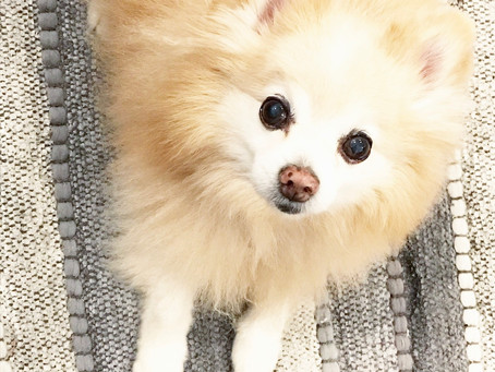 Senior Dog of the Month - Pucci!