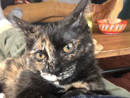 Kitten of the Month - Stella!
