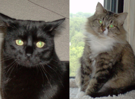 Senior Cats of the Month - Emma and Sherlock!