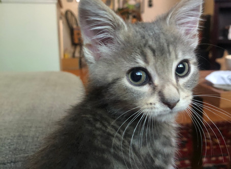 Kitten of the Month - Jam!