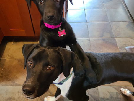 Staff Pets of the Month - Hamilton & Coral!