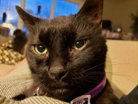 Senior Cat of the Month - Louie!