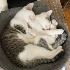 Kittens of the Month - Azura & Dibella!