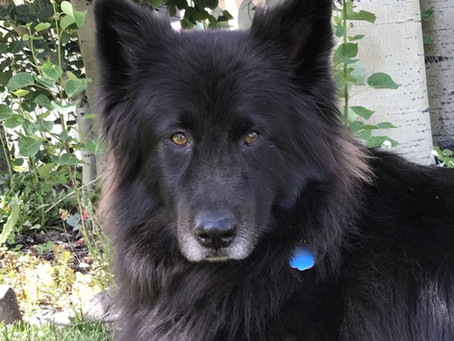 Senior Dog of the Month - Leo!
