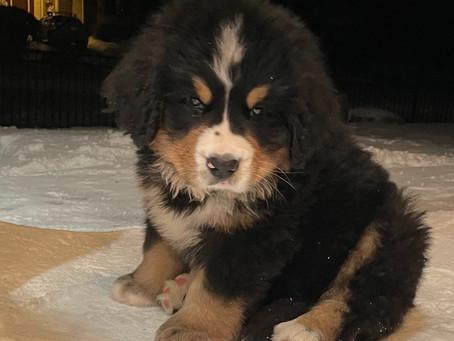 Puppy of the Month - Herschel!