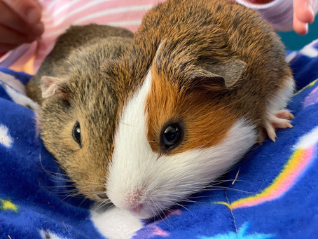 Exotic Pets of the Month - Nina & Lucy!