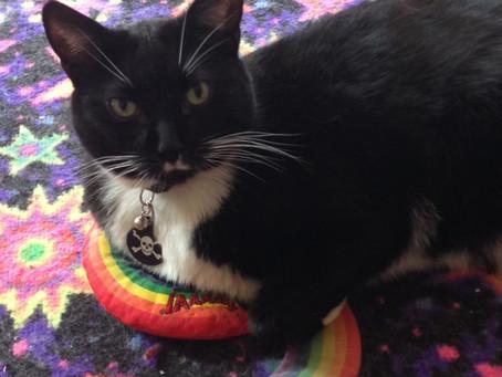 Senior Cat of the Month - Mr. Frisky!