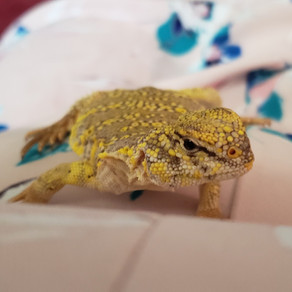Exotic Pet of the Month - Sunny!