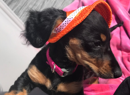 Puppy of the Month - Ruby Rose!