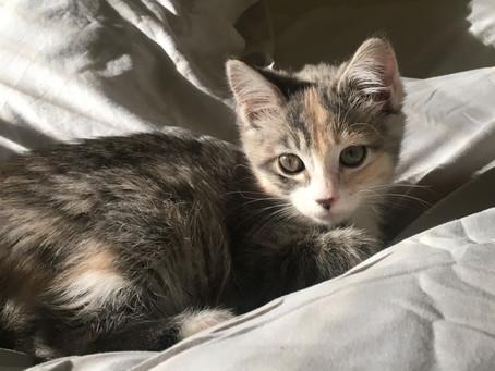 Kitten of the Month - K'nehsaw!