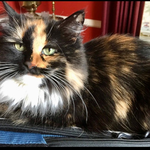 Senior Cat of the Month - Charlotte!