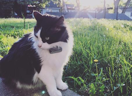 Senior Cat of the Month - Roxy!