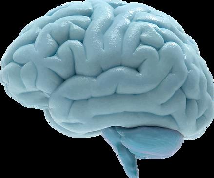 Real brainwave.png