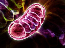 Power plants collapse: Mitochondrial Diseases