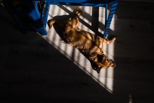Dog in pocket light