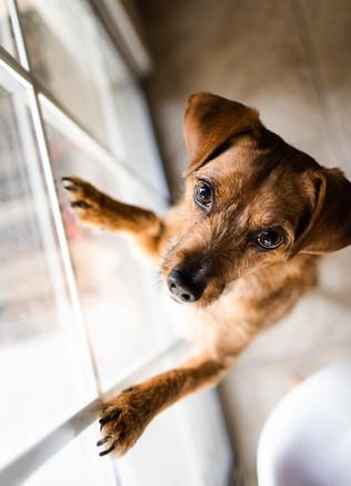 Cute dog by window