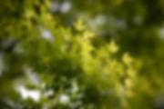 Jardin botanique5.JPG