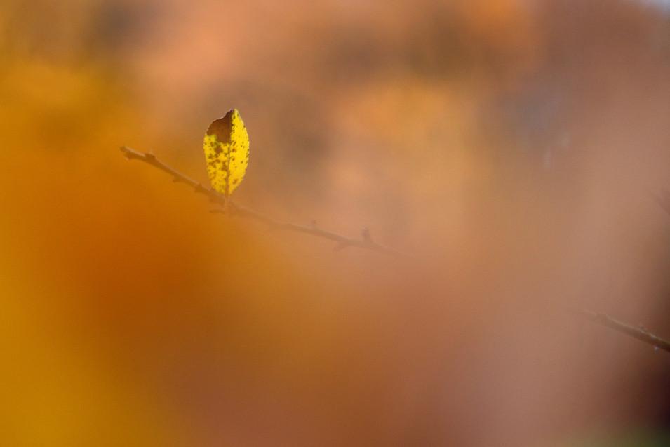Nature, site45.JPG
