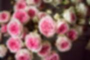 Lyne Quetin-Martinaud | Lyne photographe | Lyne arts | Fleurs | macro