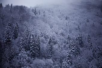 Semaine 6 - Un manteau d'Hiver.JPG
