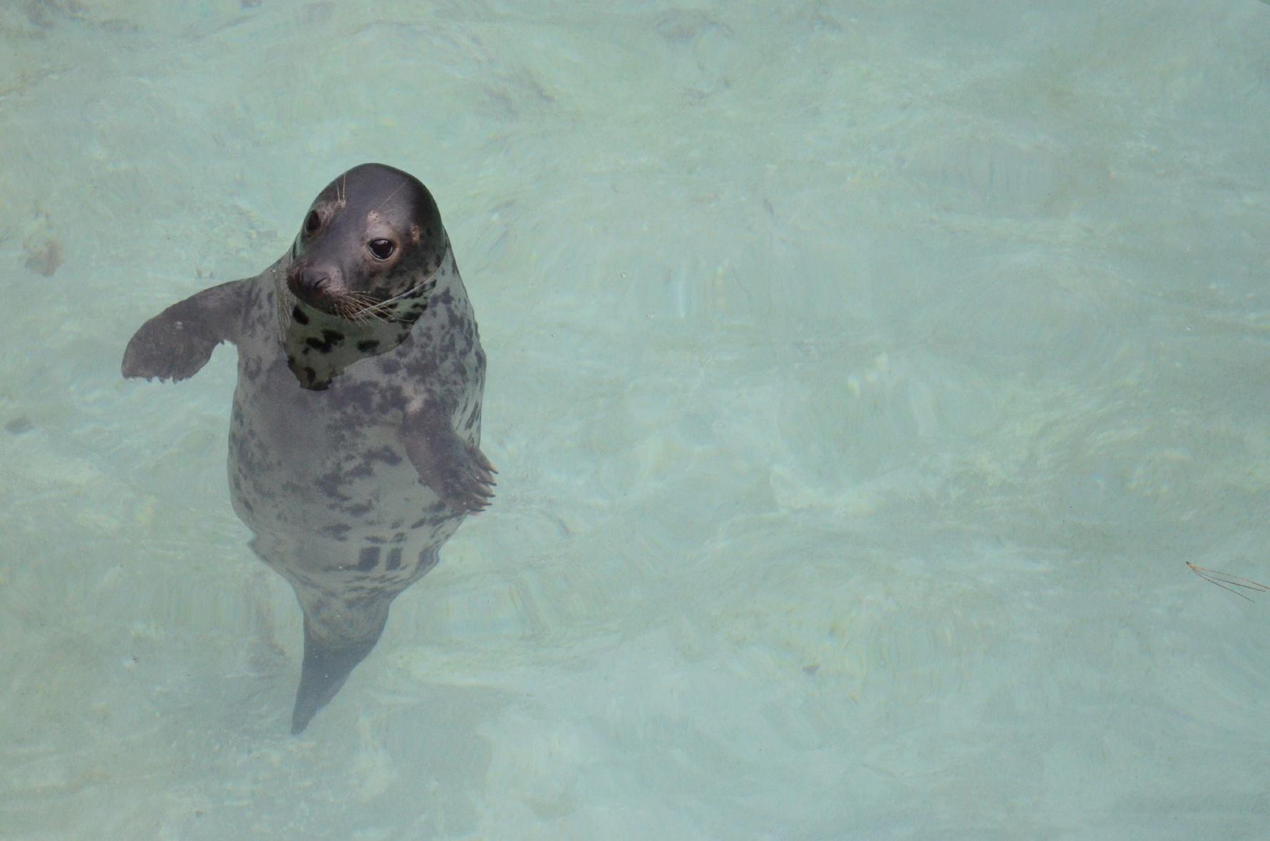 Seal Pup, Gweek