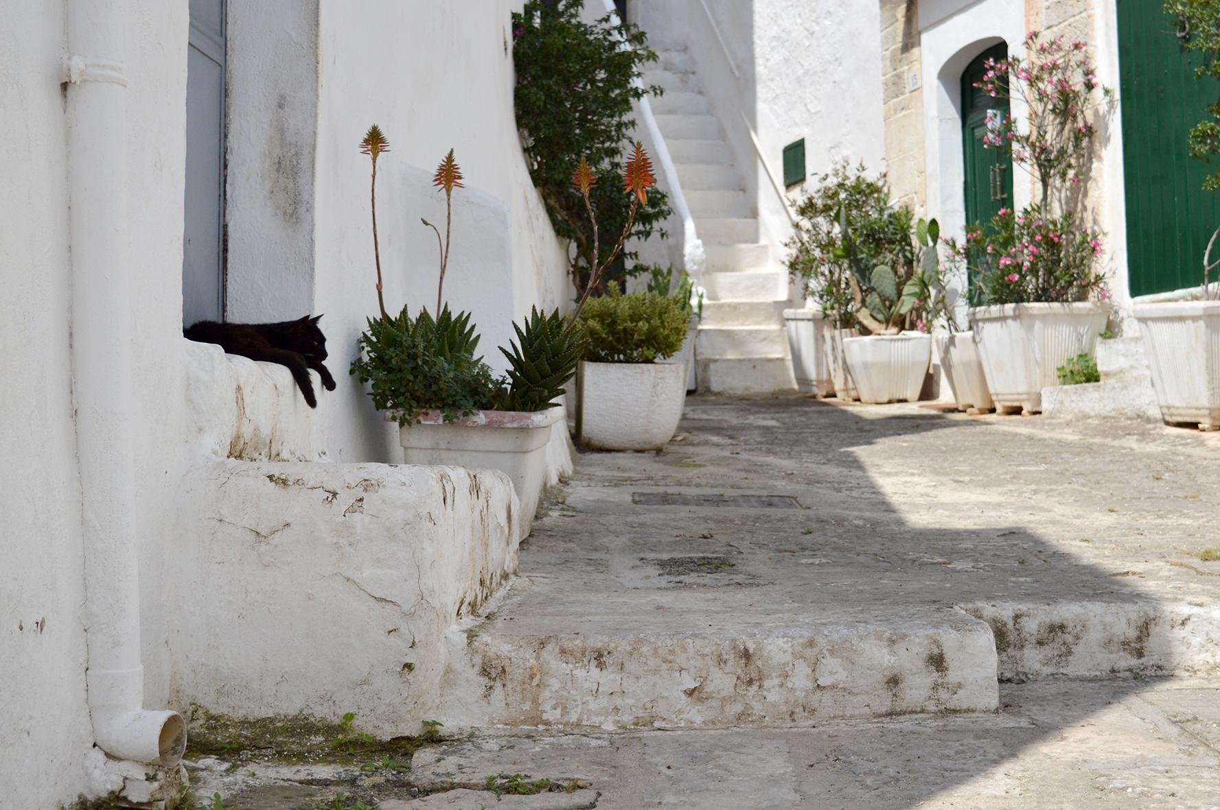 Black Cat, Old Town, Ostuni