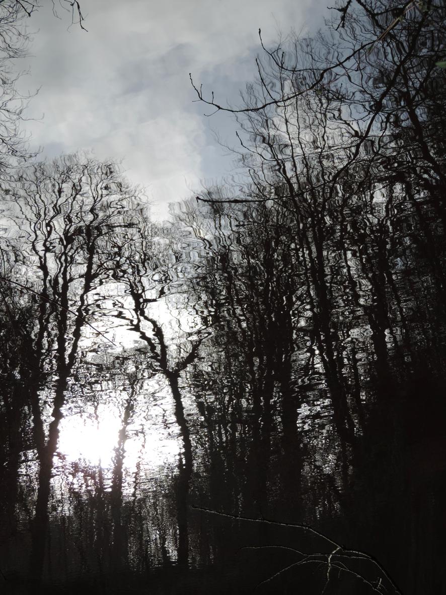 Tree Puddle