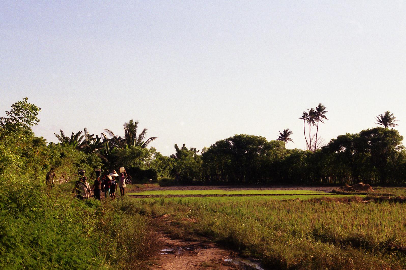 Tea Pickers, Sumbawa