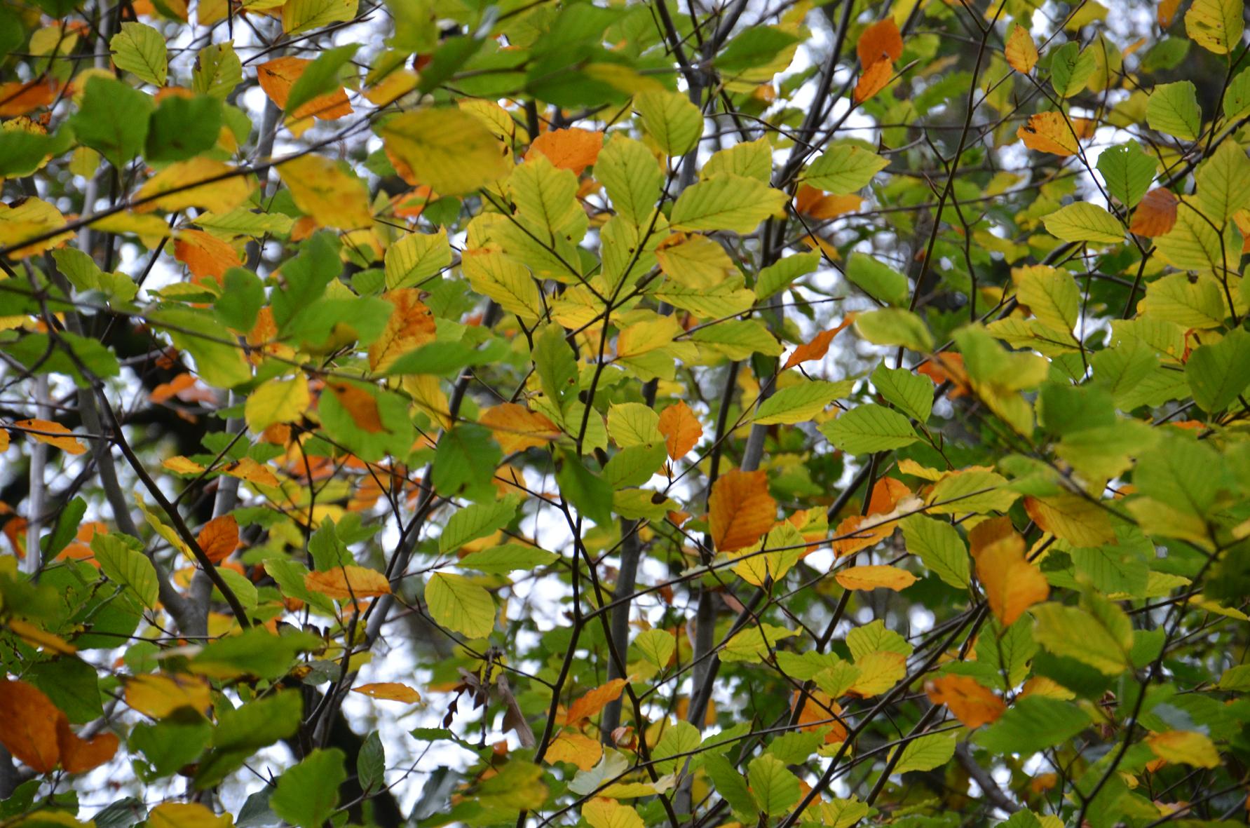 Becoming Autumn