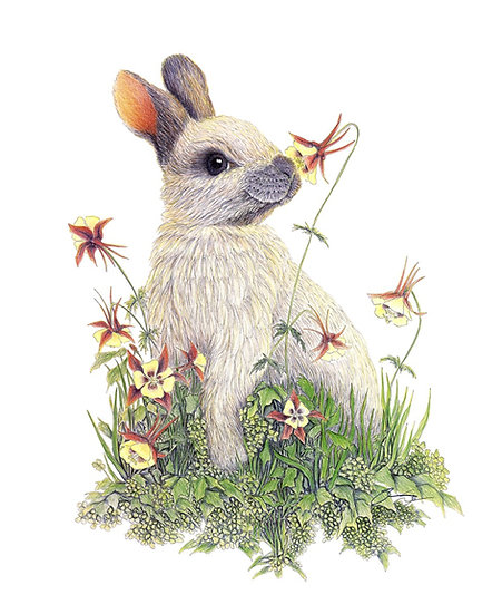 Bunny in Wildflowers