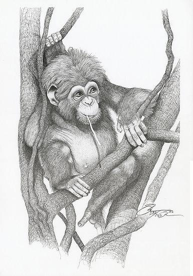 1985 Chimp