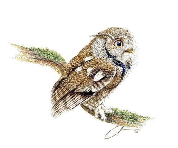 The Screech Owl