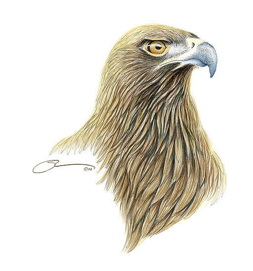 The Golden Eagle Portrait