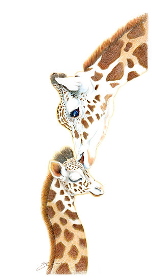Unconditional Love Giraffe