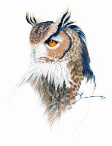 The Great Horned Owl Portrait