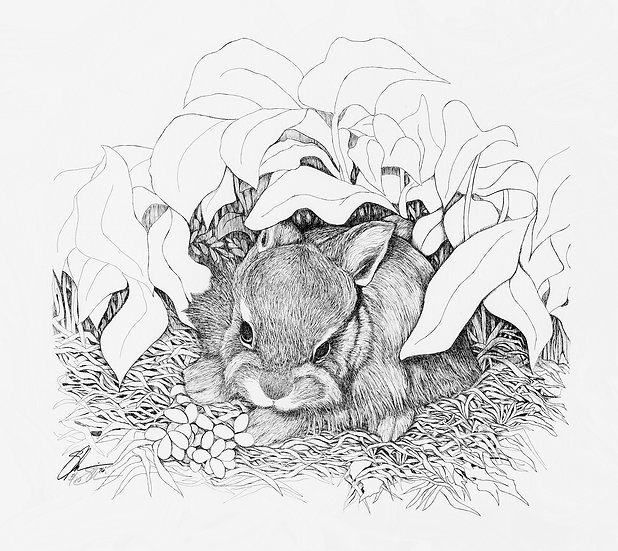 "1976 Swamp Bunny 14""x 18"" Archive Print"