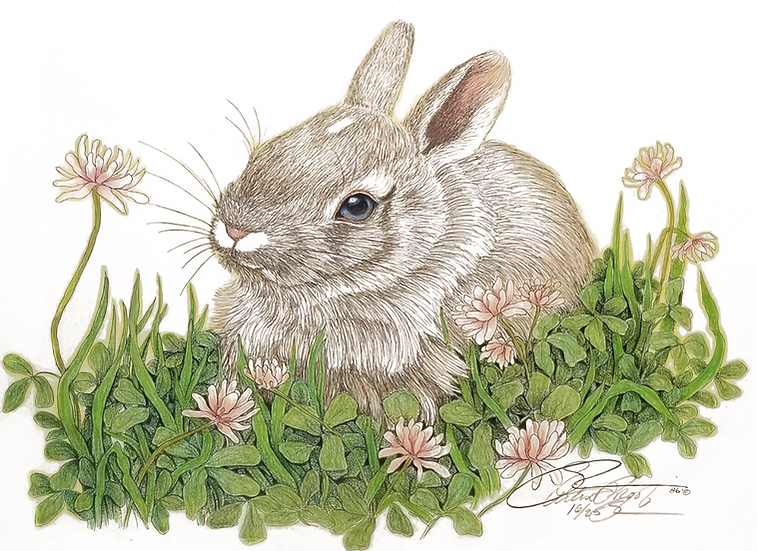 The Baby Cottontail