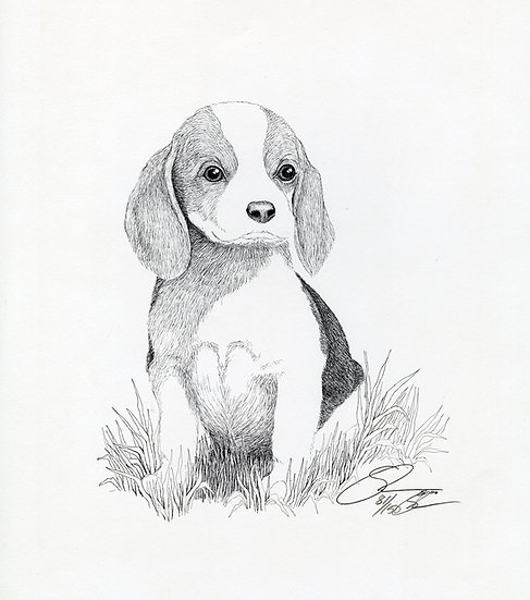 1981 Beagle Pup