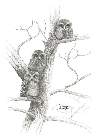 """1986 Baby Barred Owls """"The Guys"""""""